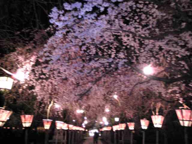 夜のお散歩、春